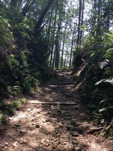 熊野古道の坂