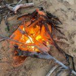 流木を燃やす